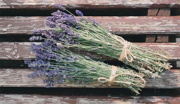 lavender_sleep